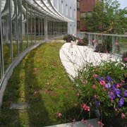 Green roof at Wheelock College